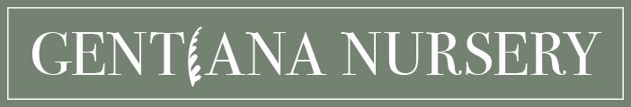Gentiana Nursery